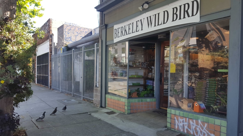 """Sign reading """"Berkeley Wild Bird"""" with three pigeons in front"""