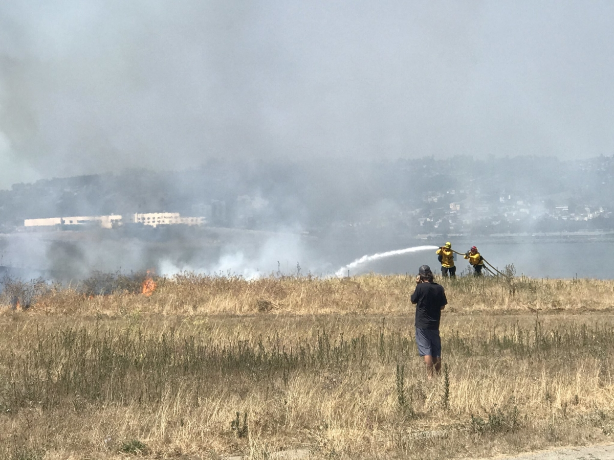 Berkeley firefighters tackle a grass fire at Cesar Chavez Park on July 5, 2020