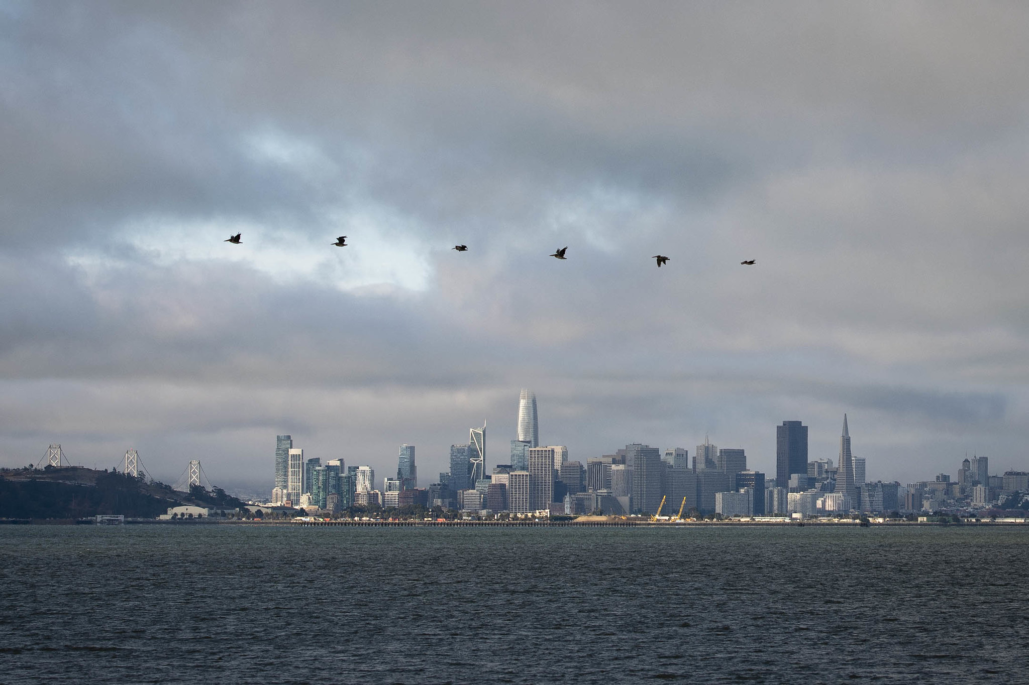 Pelicans flying across San Francisco bay with skyline in background